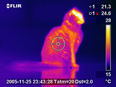 Thermogram of a cat showing it glowing orange against a black background